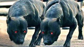 Bulaşmak İstemeyeceğiniz 10 Bekçi Köpeği