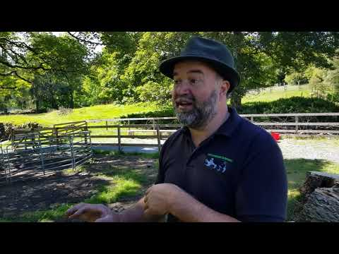 Training a sheepdog to shed with Michael Crowe
