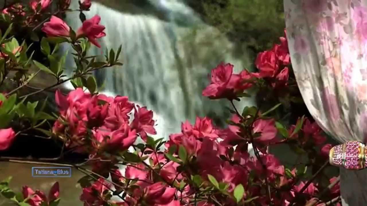 ❀ happy anniversary flowers! ❀ happy palm sunday! ❀ youtube