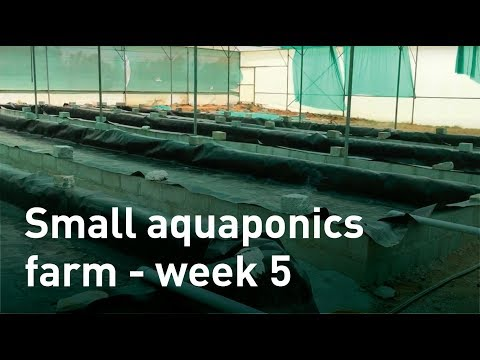 Small Aquaponics Farm Week 5