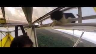 Mission: Impossible Rogue Nation (Cat Version)