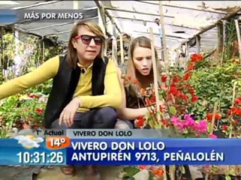 Plantas A Muy Bajos Precios Toto Y Vale Te Cuentan Youtube