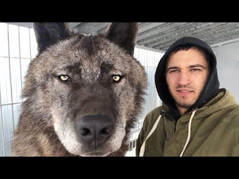10 Wolves You Won't BELIEVE Actually Exist!