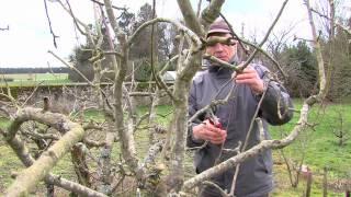 Environnement : les bons conseils pour la taille des arbres fruitiers