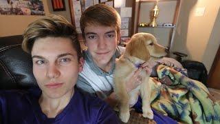 WE GOT A DOG!!