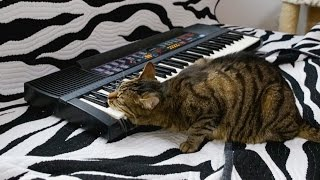 Cat is Playing on Synthesizer (Piano)