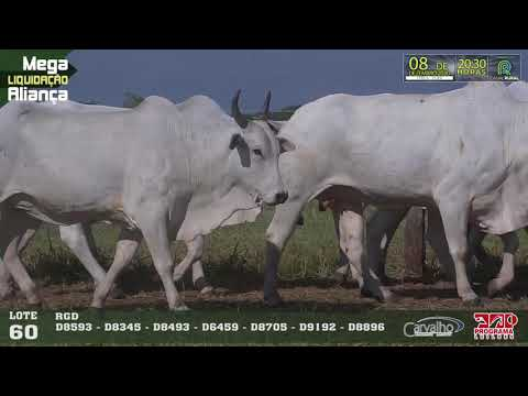 LOTE 060
