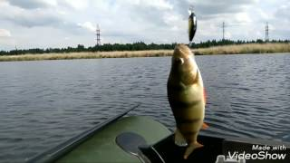 Рыбалка в Челябинске.Окунь на спиннинг.Залив,озеро Смолино.23 июня 2017г.
