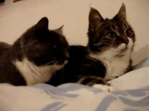 แมวดูหนัง น่ารักๆ (พากย์ไทย) โดย แซ็กโซโฟน