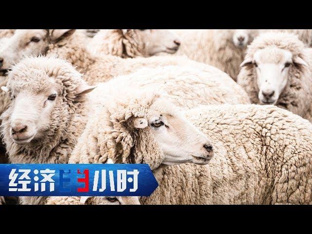 《经济半小时》 20190520 不产羊毛的世界羊绒集散地  CCTV财经