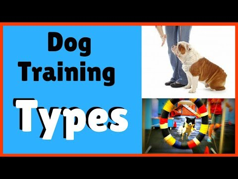 Types of dog training | specialty dog training