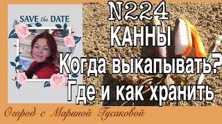 224. Как хранить КАННЫ. Огород с Мариной Гусаковой