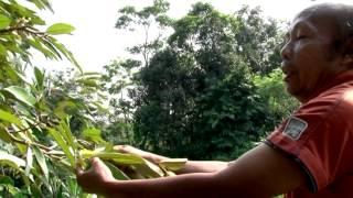 Download lagu Teknik Perbanyakan Tanaman Buah (rev) 3