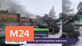 В Ступино сгорел центр передержки животных - Москва 24