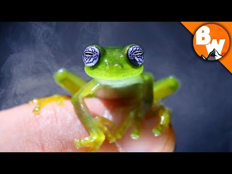Do You Believe in Ghost Frogs?
