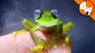 do-you-believe-in-ghost-frogs