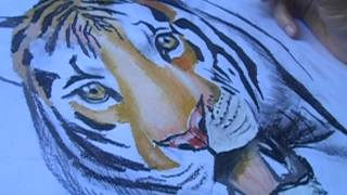 How to Draw a Tiger By Vlad Dias