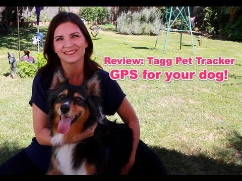 5866831 additionally Garmin Delta Smart Bundle Bark Train Deterrent Activity Tracker also Fitbit 476  mercial furthermore Can Dog Activity Monitors Help You Both Get Fit We Put Four To The Test together with R Animaux led noel. on gps train tracker