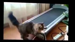 Смешные кошки видео нарезка Топ 10 смешно смотреть онлайн