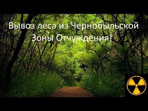 Как вывозят лес из Чернобыльской Зоны Отчуждения!  How To Remove The Forest From The CEZ!