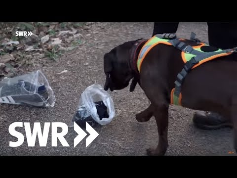 Die Supernasen - Polizeihunde-Teams im Einsatz   Mensch Leute BW