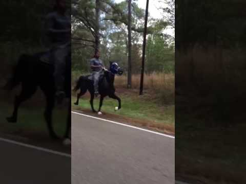3 year old trotter mare! Kegshod racking owner by johnathan banks in training with Shamir Johnson