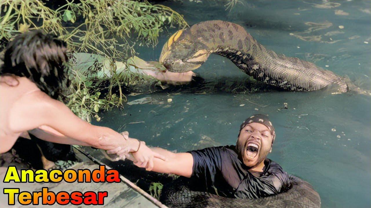 Download ULAR ANACONDA TERBESAR DI SUNGAI AMAZON | Alur Cerita Film ANACONDA