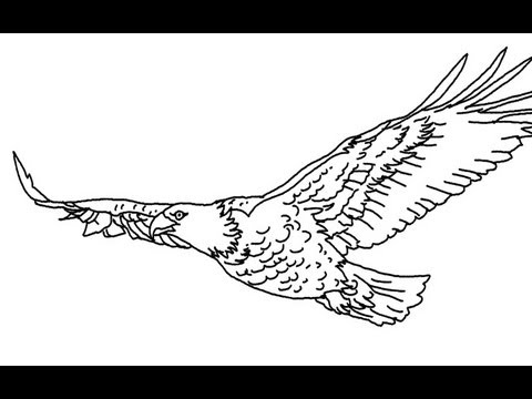 how to draw a flying eagle