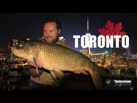 Carp Zone Go Carp Fishing In Toronto Canada