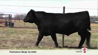 7AN349 Plattemere Weigh Up K360