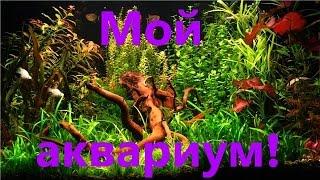 Мой аквариум! Аквариумные рыбки! [#Аквариумные рыбки](Содержание аквариума: https://www.youtube.com/watch?v=qp9Z73EbDJ4&index=2&list=PLXOVwrO8wPCPSsRUsoOlf8lB5E3jWOMKg Другие видео на ..., 2014-12-22T13:38:04.000Z)