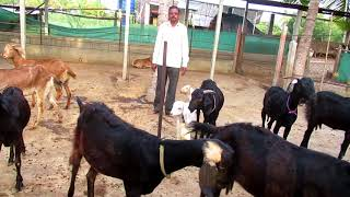 Deokate Goat Farm Introduction & Day to Day Management Part 1