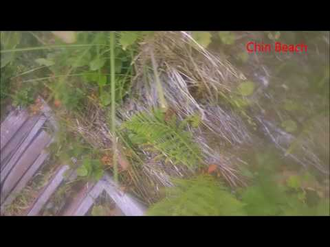 Juan de Fuca Marine Trail in 12 hrs - Trail Footage and Review (07/08/2017)