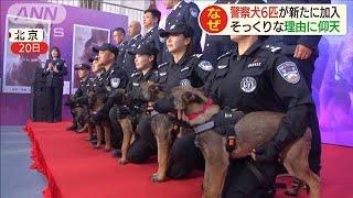 警察犬6匹を新しく採用 そっくりな理由に仰天!(19/11/25)