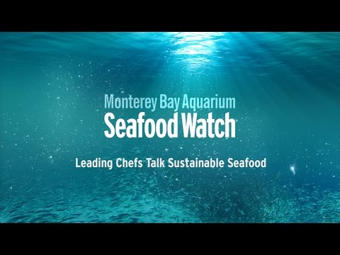 Seafood Watch - PROMO