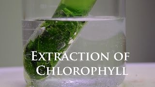 Extraction and Fluorescence of Chlorophyll