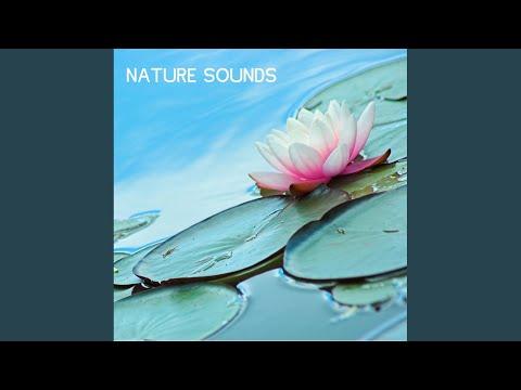 Nature sounds nature music a secret garden forest sounds