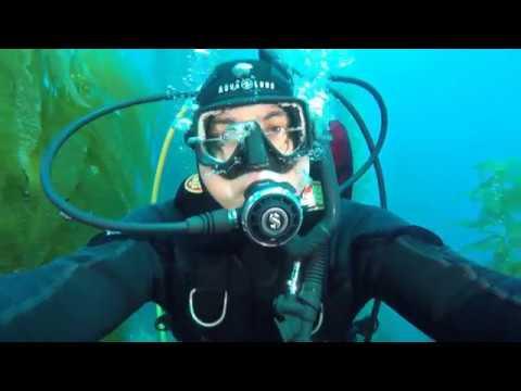 Just Diving | Cruising Through Kelp