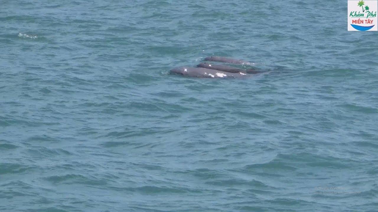 Đi câu cá biển không ngờ lại gặp đàn cá heo | Dolphin