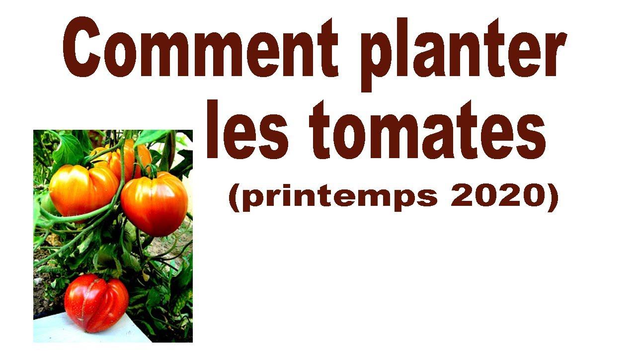 Comment planter les tomates printemps 2020 - YouTube