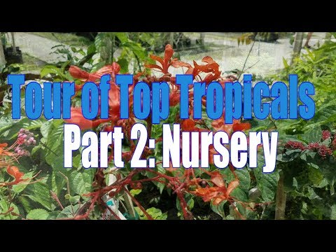 Tour Of Top Tropicals Part 2 Nursery