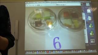 Семинар  Использование цифрового микроскопа на уроках окружающего мира в исследовательских работах