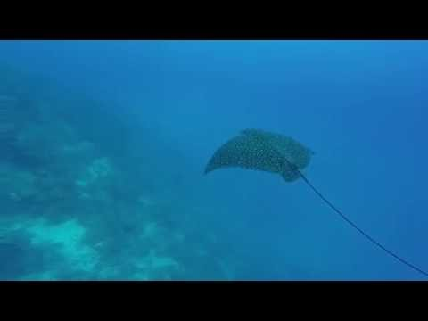 St  George's Caye diving, Belize 2016
