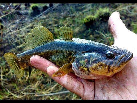 Как  убрать запах рыбы если вы ее готовите - полезные советы для хозяйки
