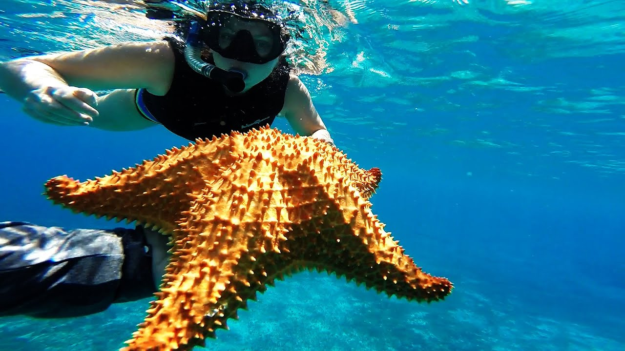 Cozumel Snorkeling Adventure February 15th 2014 ...