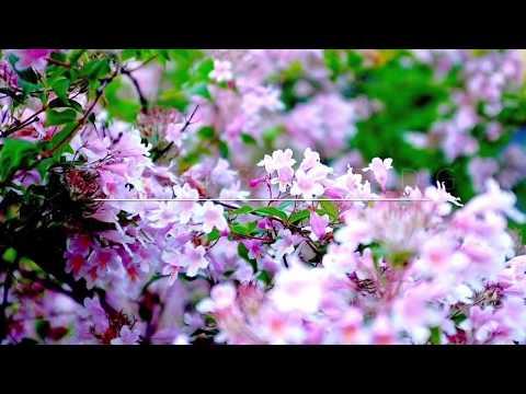 6 växter för att snabbt skapa känslan av vår Inomhus