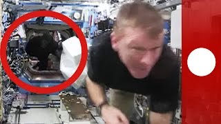 "Tim Peake chased through ISS by a ""gorilla"""
