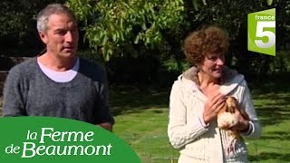 Les poules de la ferme de Beaumont dans
