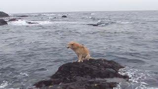 Warum Bleibt Dieser Hund Trotz Der Großen Wellen Auf Dem Felsen Zurück?
