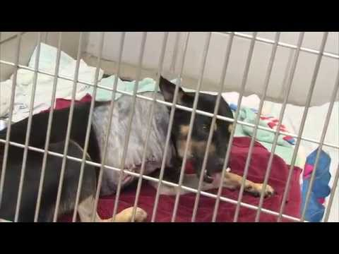 Pet Spaces of Hope Adopts A Shelter Part 1